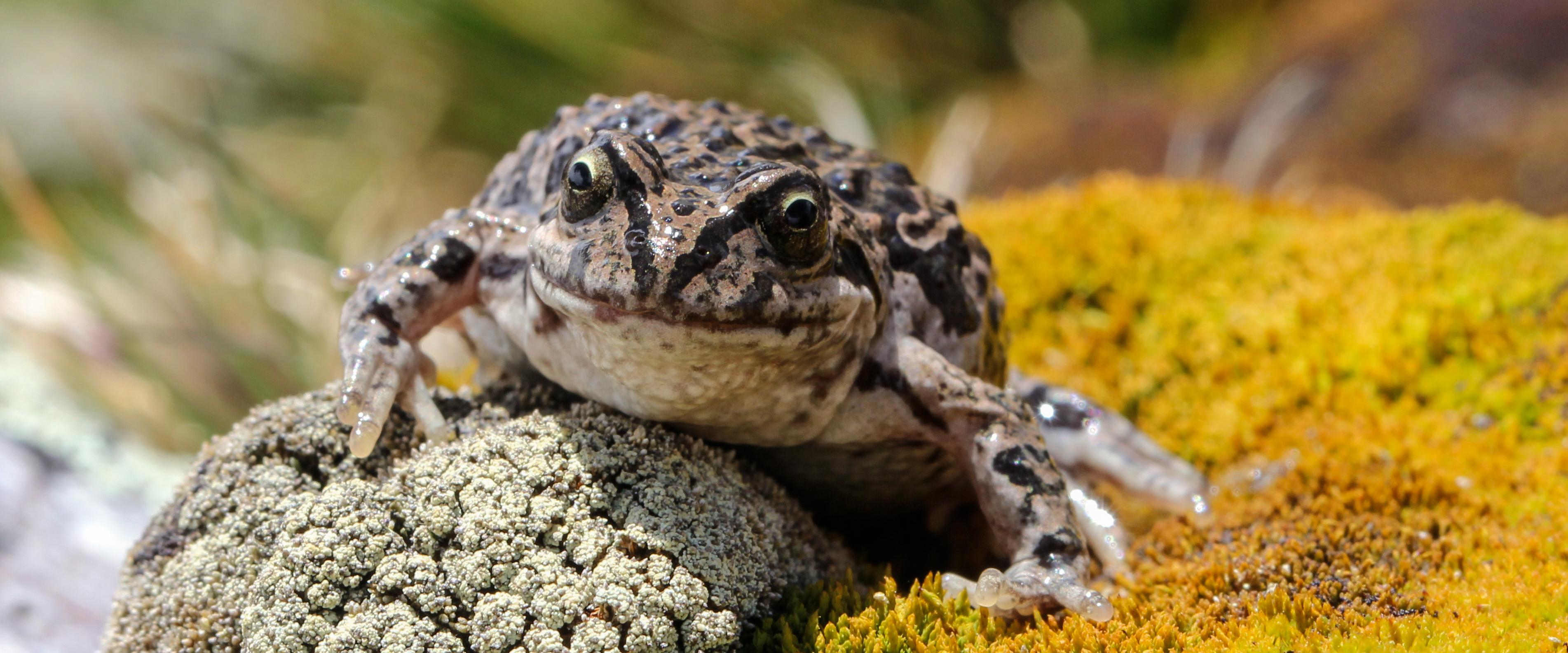 World Record Amphibians