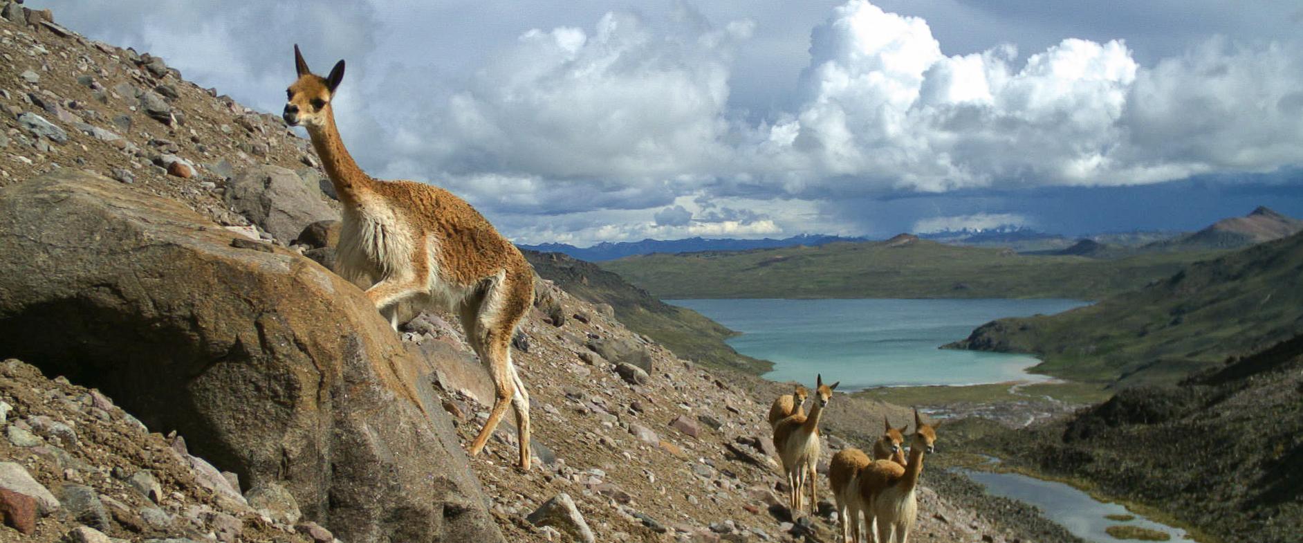 Diverse and Rare Mammals